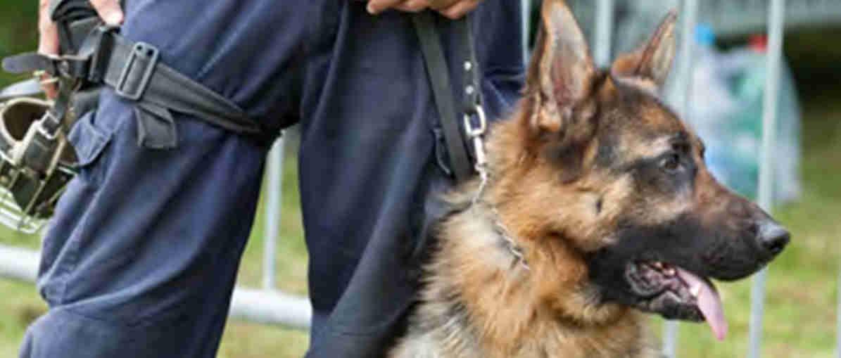 Dog Handler dog unit