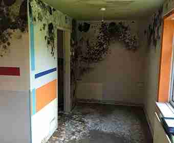 Mould Removal for Vacant Properties